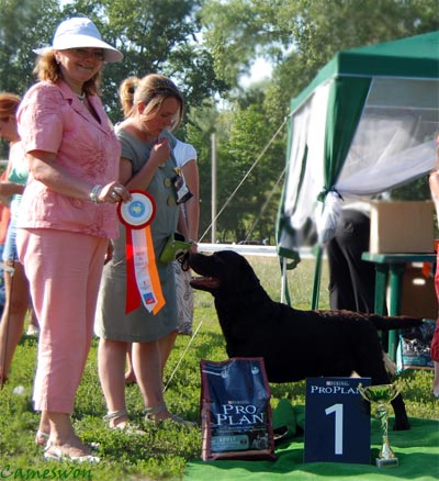Cameswon Comedy Club - Best Labrador on Dog Show in Cherkasy  2010