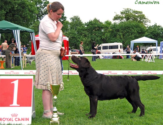 Cameswon Comedy Club - Best male labrador on CACIB in Ternopol 2010