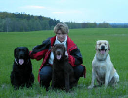 Cameswon Labradors in the field