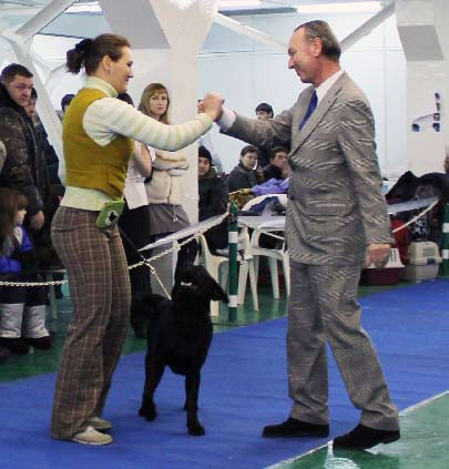 Cameswon Deluxe - Best junior labrador at CAC show in Novosibirsk 01-2011