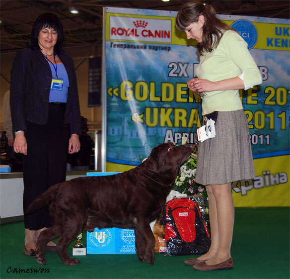 Labrador Int Ch Stenveyz Red October Best Veteran at Ukraine National Championship 2011